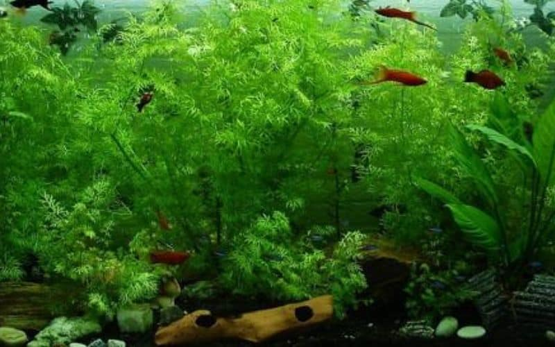 fresh water aquarium - how often should you change the water