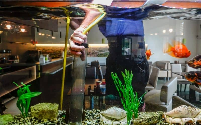 man cleaning fish tank