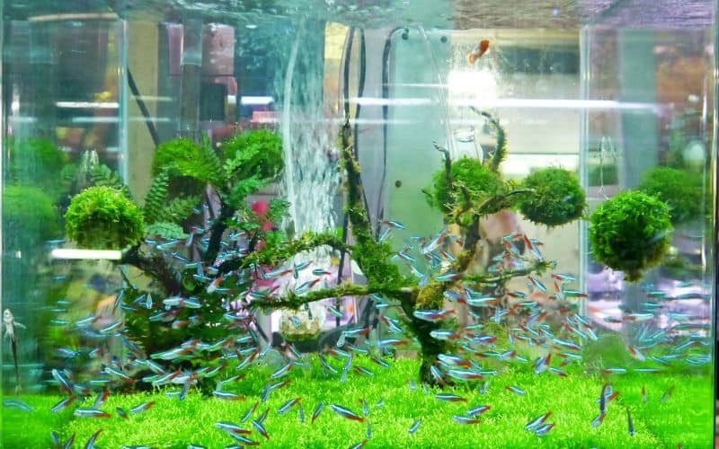 Image of small fish tank up close with neon fish inside